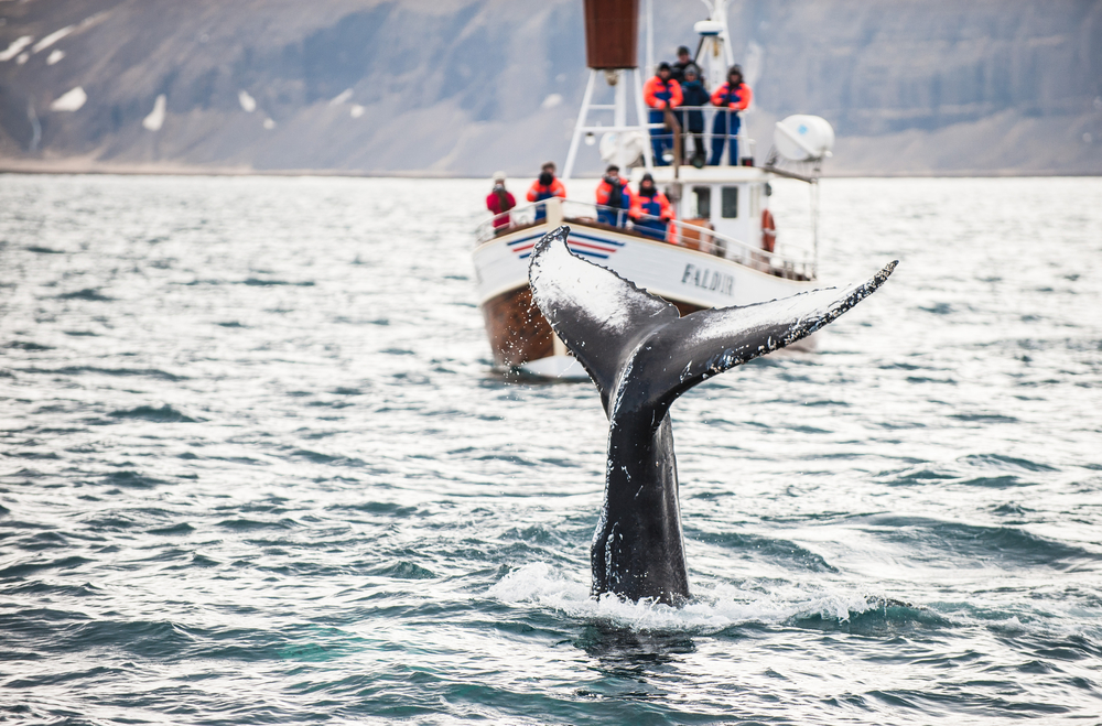 5 Tips for the Best Whale Watching Experience